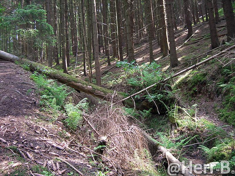 unwegsamer Wald