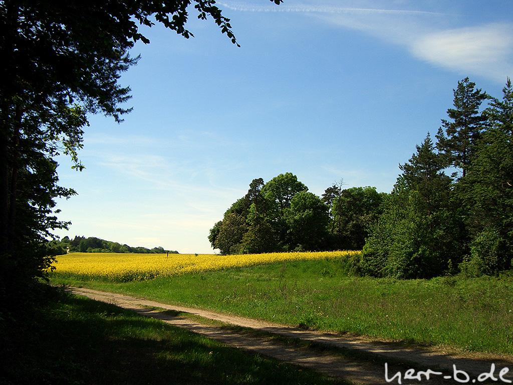 Grün mit Gelb und blauem Himmel