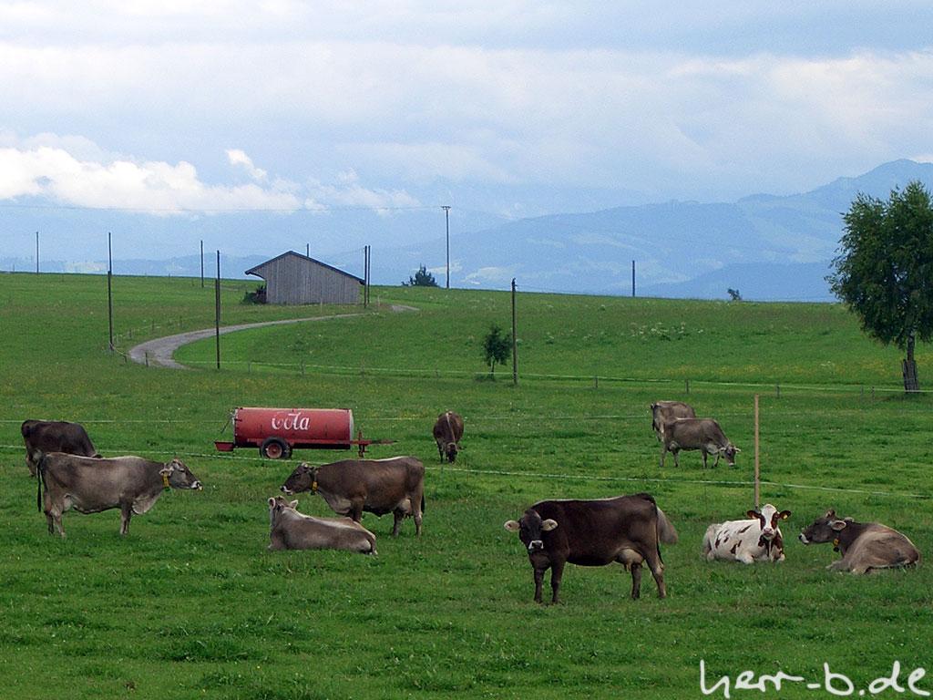 Fast Food-Kühe