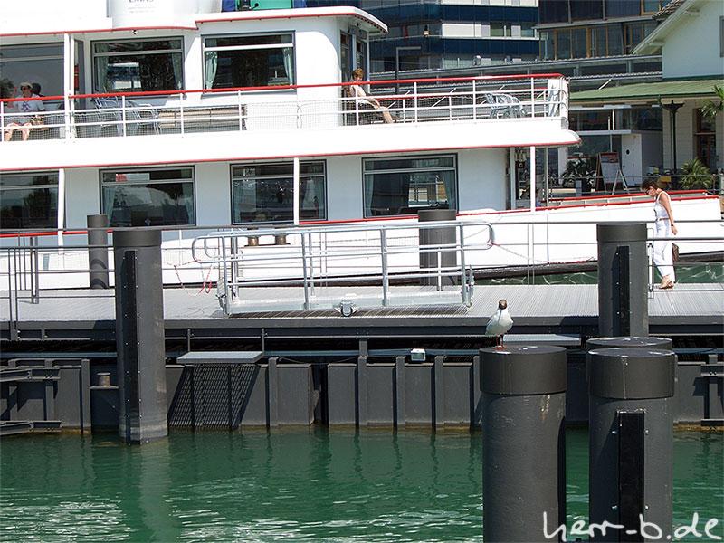 Freche Möwe im Bregenzer Hafen
