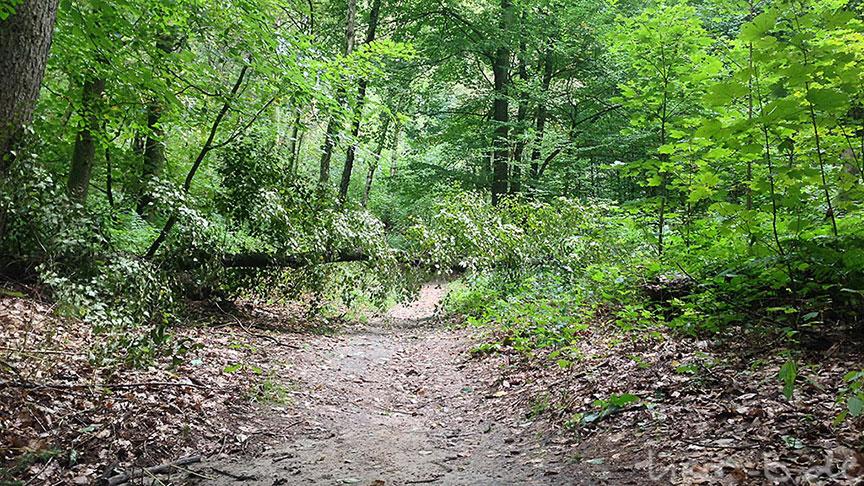 Wegsperre im Stadtwald