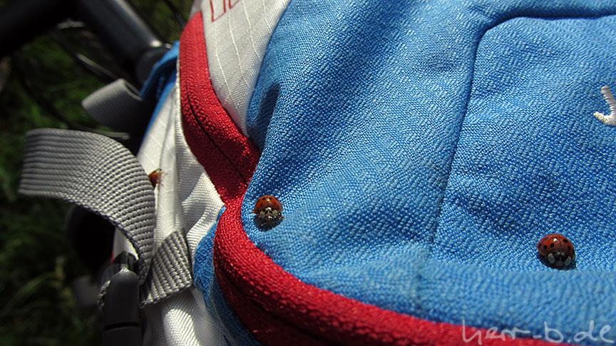 Marienkäferattacke auf meinen Rucksack