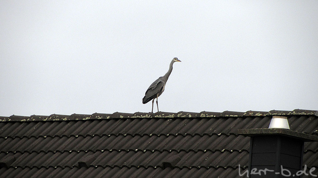 Großer Vogel auf dem Dach