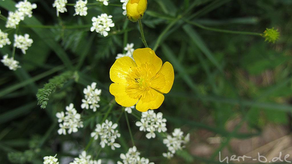Thüringer Blume