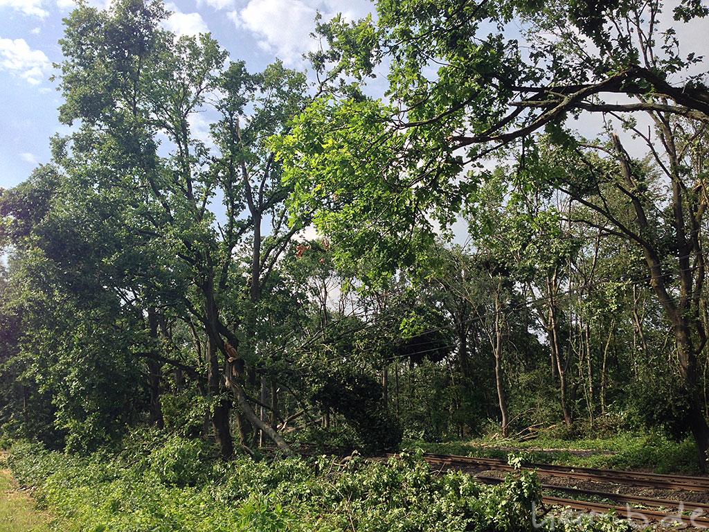 Umgestürzte Bäume auf der Bahnstrecke