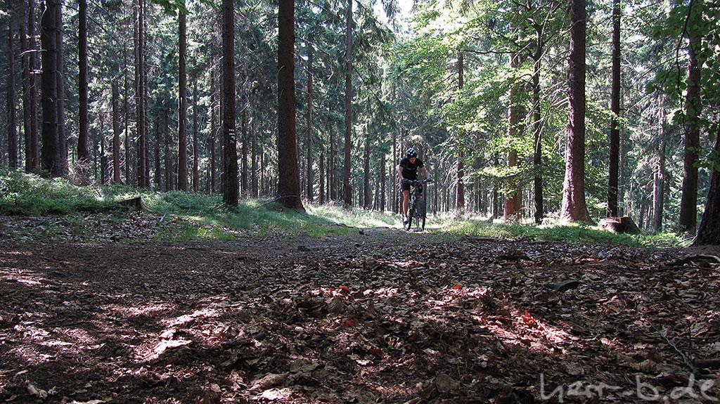 Kurbelei bergauf im Wald