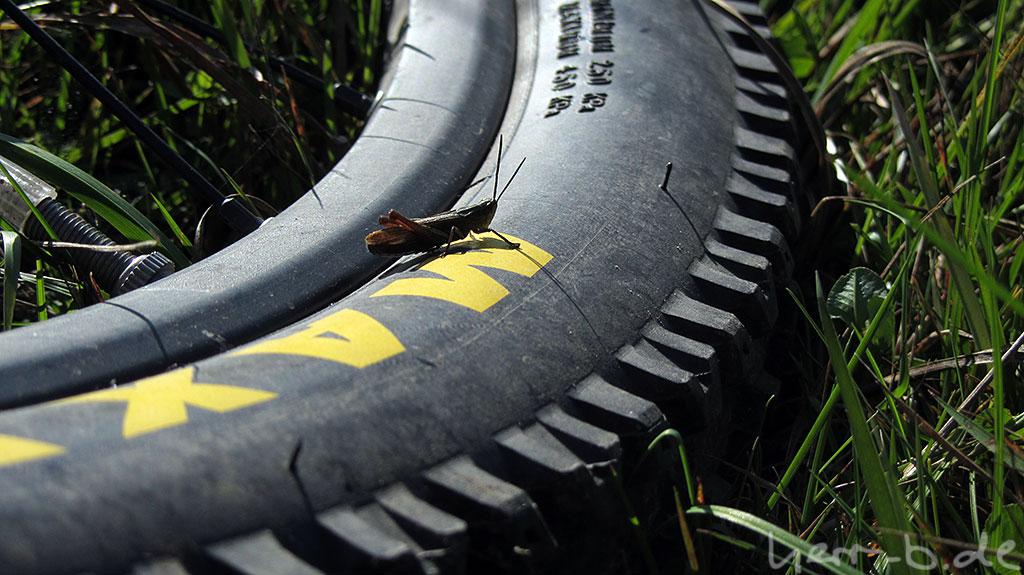 Immer wieder ein beliebtes Motiv: Grashüpfer auf Reifen.
