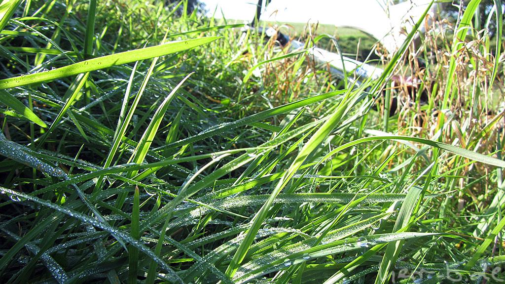 Nasses Gras im Sonnenschein