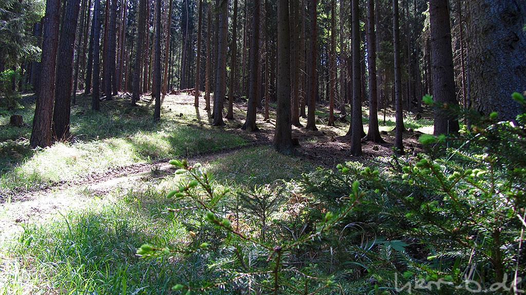 Im sonnendurchfluteten Wald.