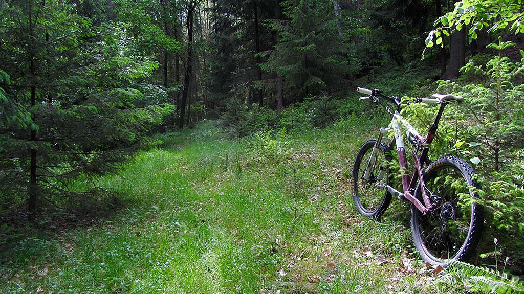 Jabba Wood im Wald (6 Jahre nach der Premiere)