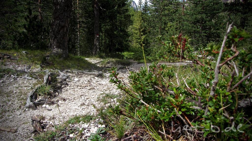 Feiner Trail im Naturpark.