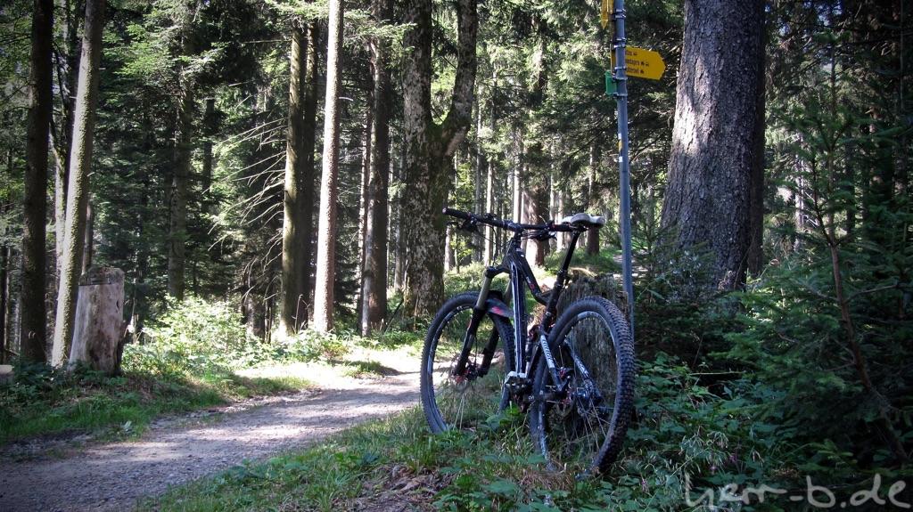 Ein Bison steht im Wald.