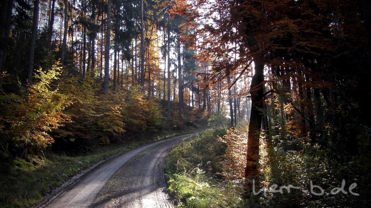 Die Herbstsonne im bunten Wald.