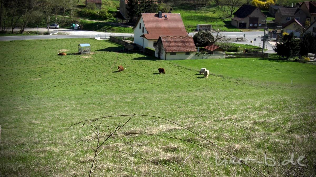 Die Hochlandrinder-Weide in Nennsdorf.