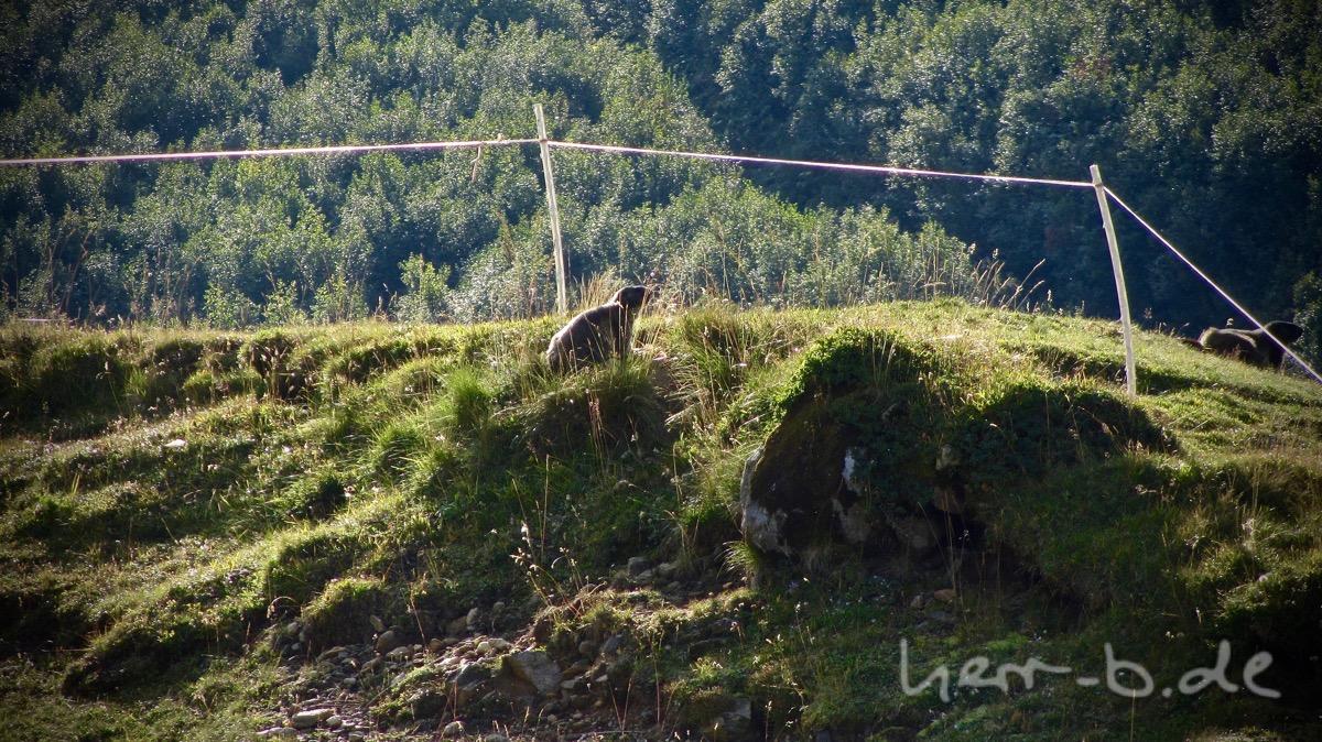 Neugierige Murmeltiere direkt neben dem Weg.
