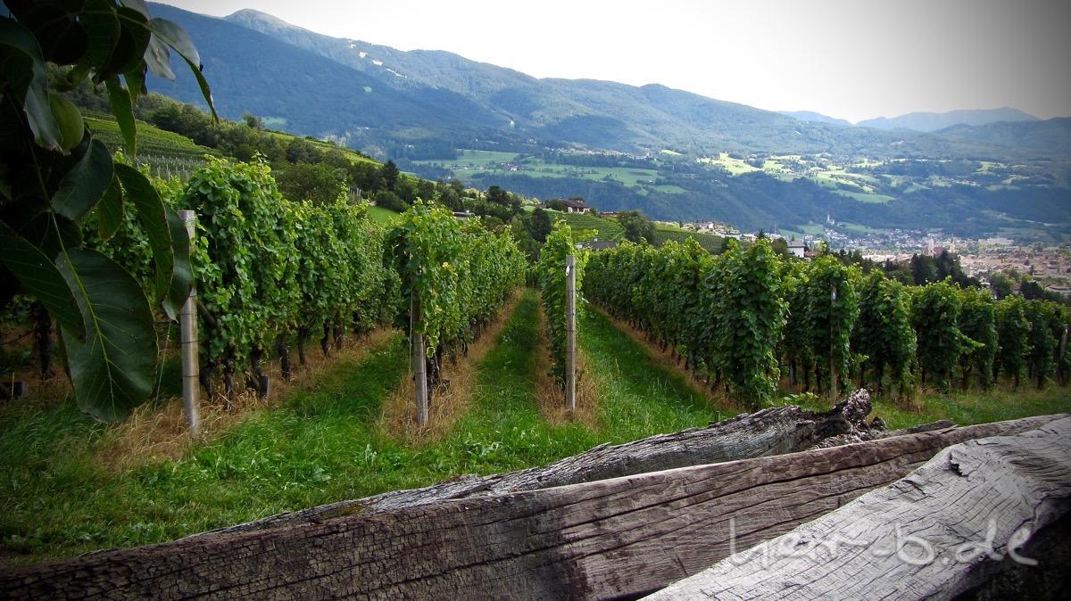 Im Weinanbau bei Brixen.