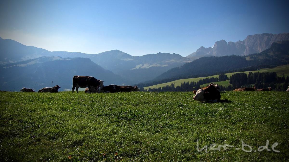 Kühe auf der Seiser Alm.