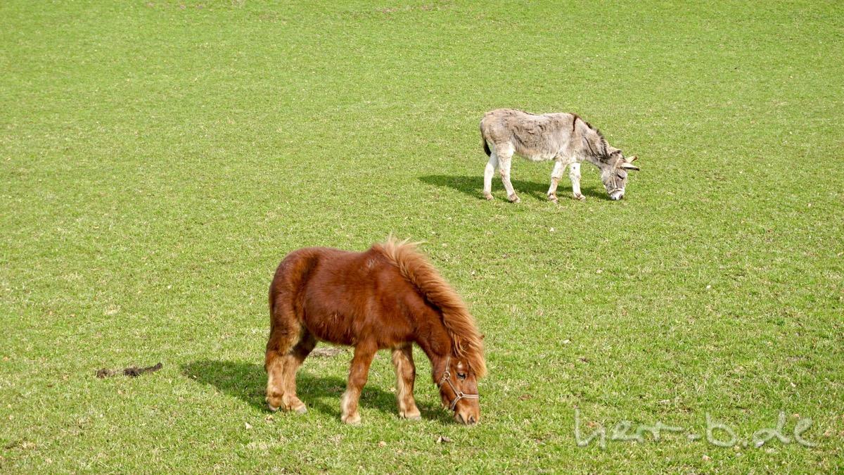 Pony und Esel.