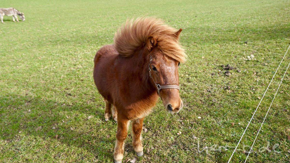 Pony mit Sturmfrisur