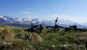 Bison und Bergfrühling