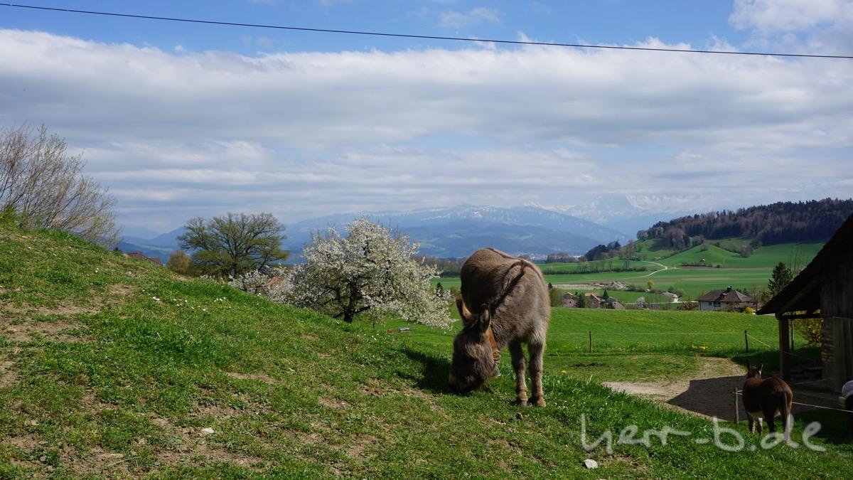 Auch die Esel genießen die Aussicht.