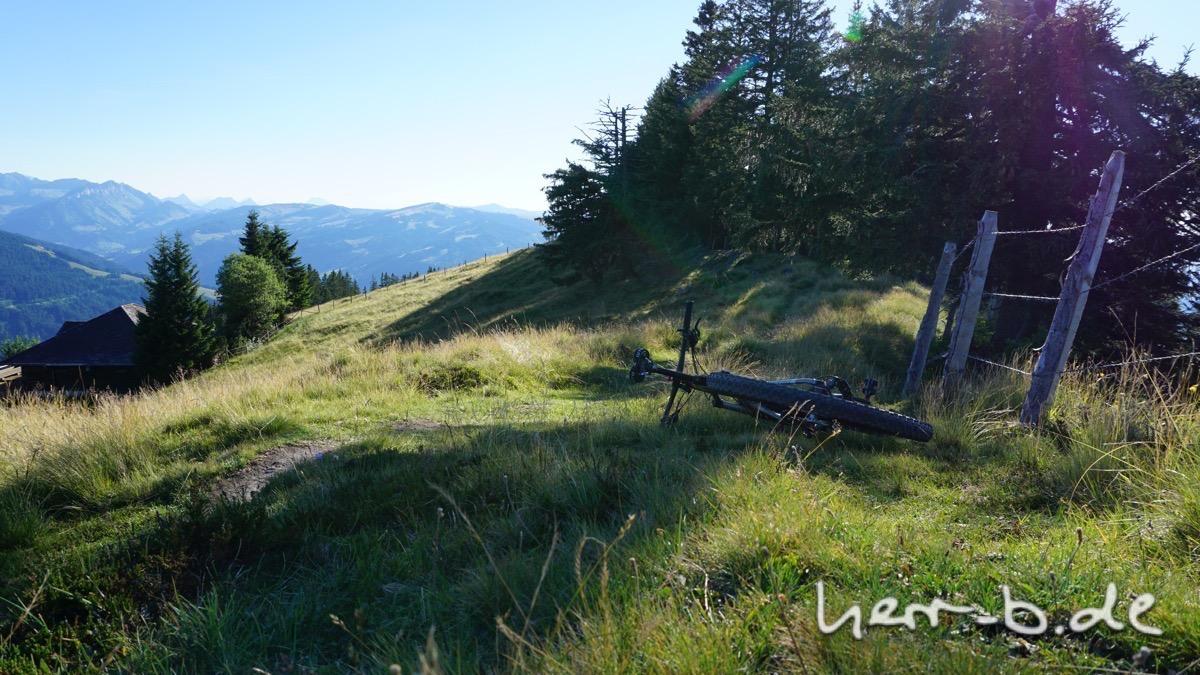 Das Bison wartet auf den Start am Trail.