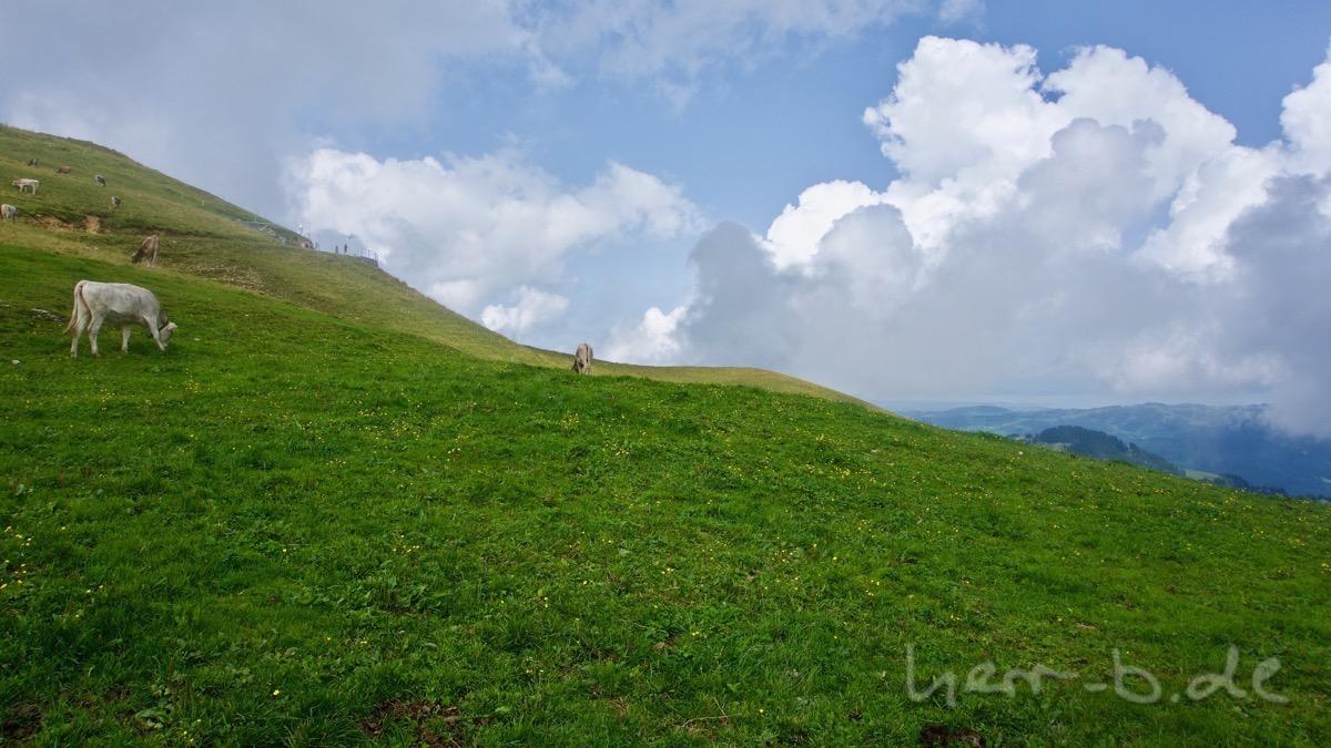 Blick zum Kamor-Gipfel mit Kühen.