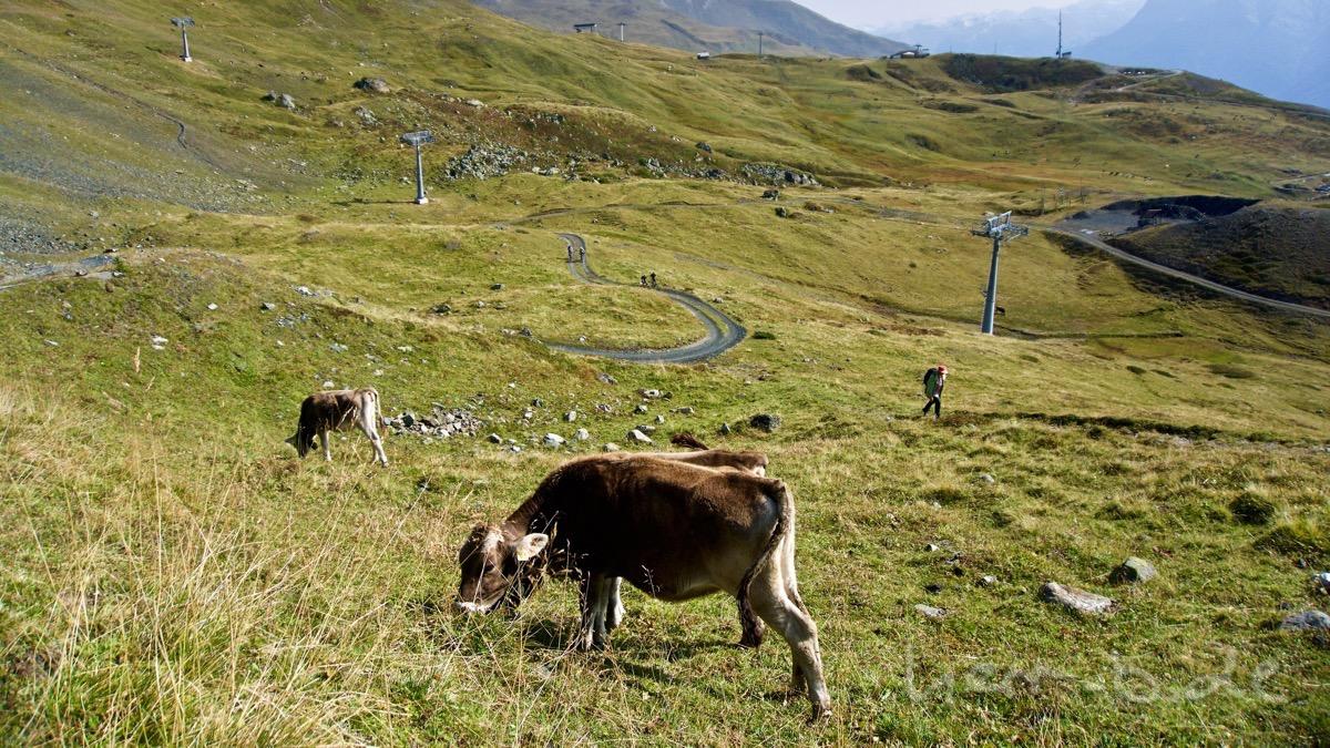 Rinder, Wanderer und Biker an der Alp Clünas.