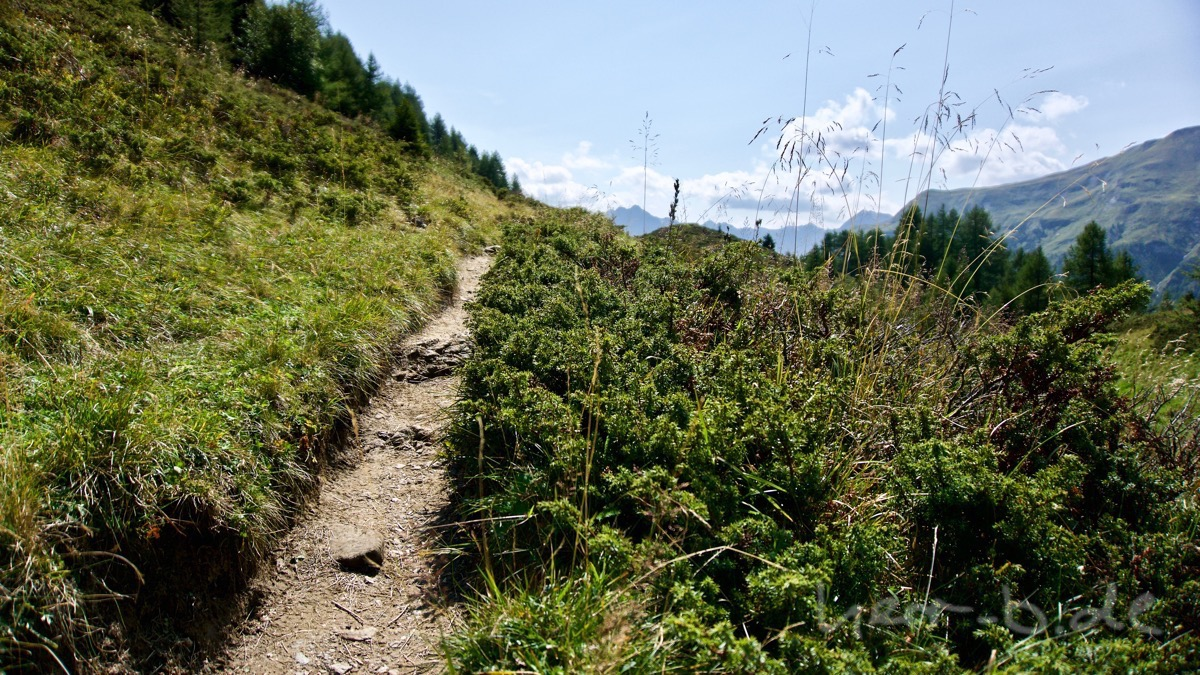 Der leckere Trail.