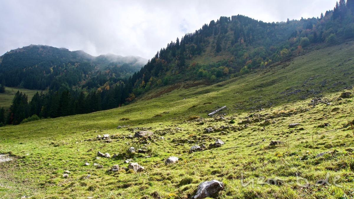 Der Herbst zeichnet erste Farbtupfer in den Bergwald.