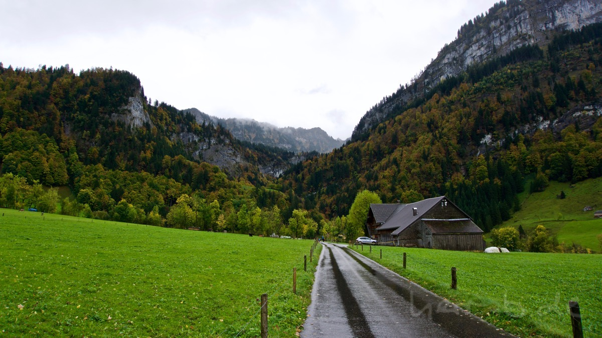 Nasser Weg in den Herbstwald bei Brülisau.