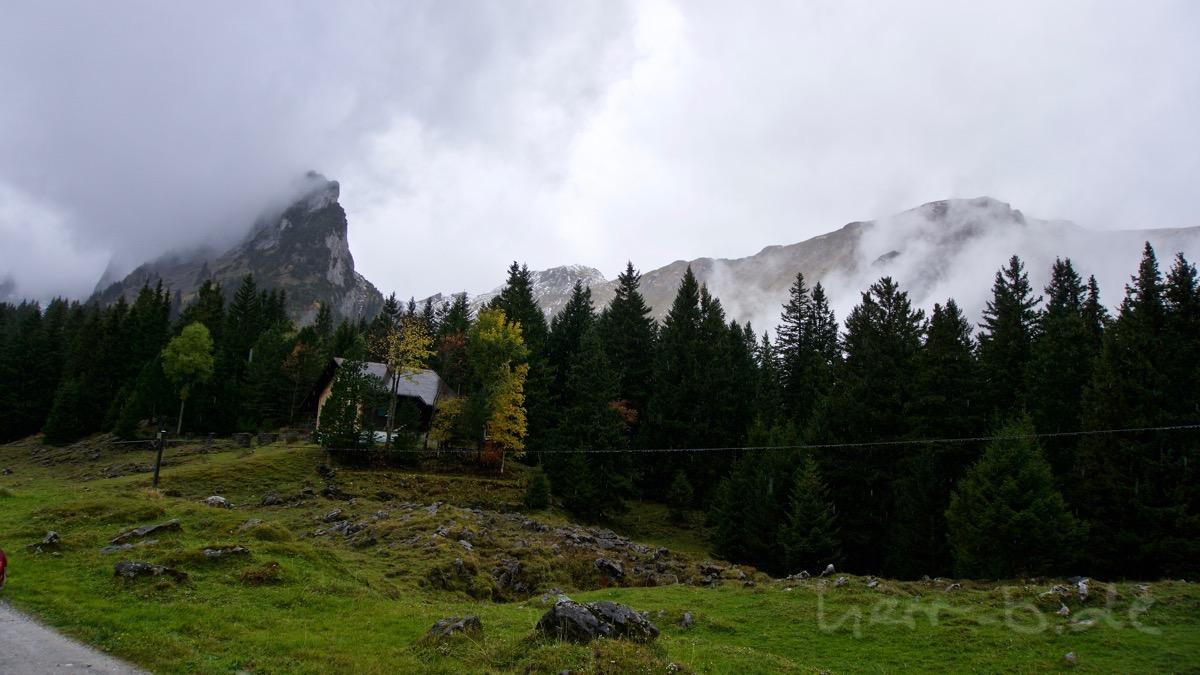Viele Regentropfen am Stiefelwald.