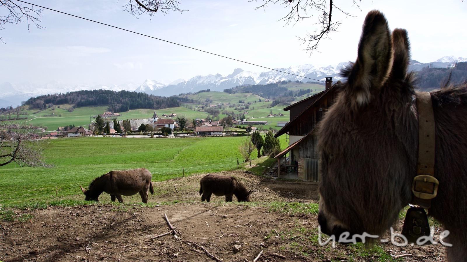 Die Esel mit Nachwuchs und Aussicht auf die Berge.