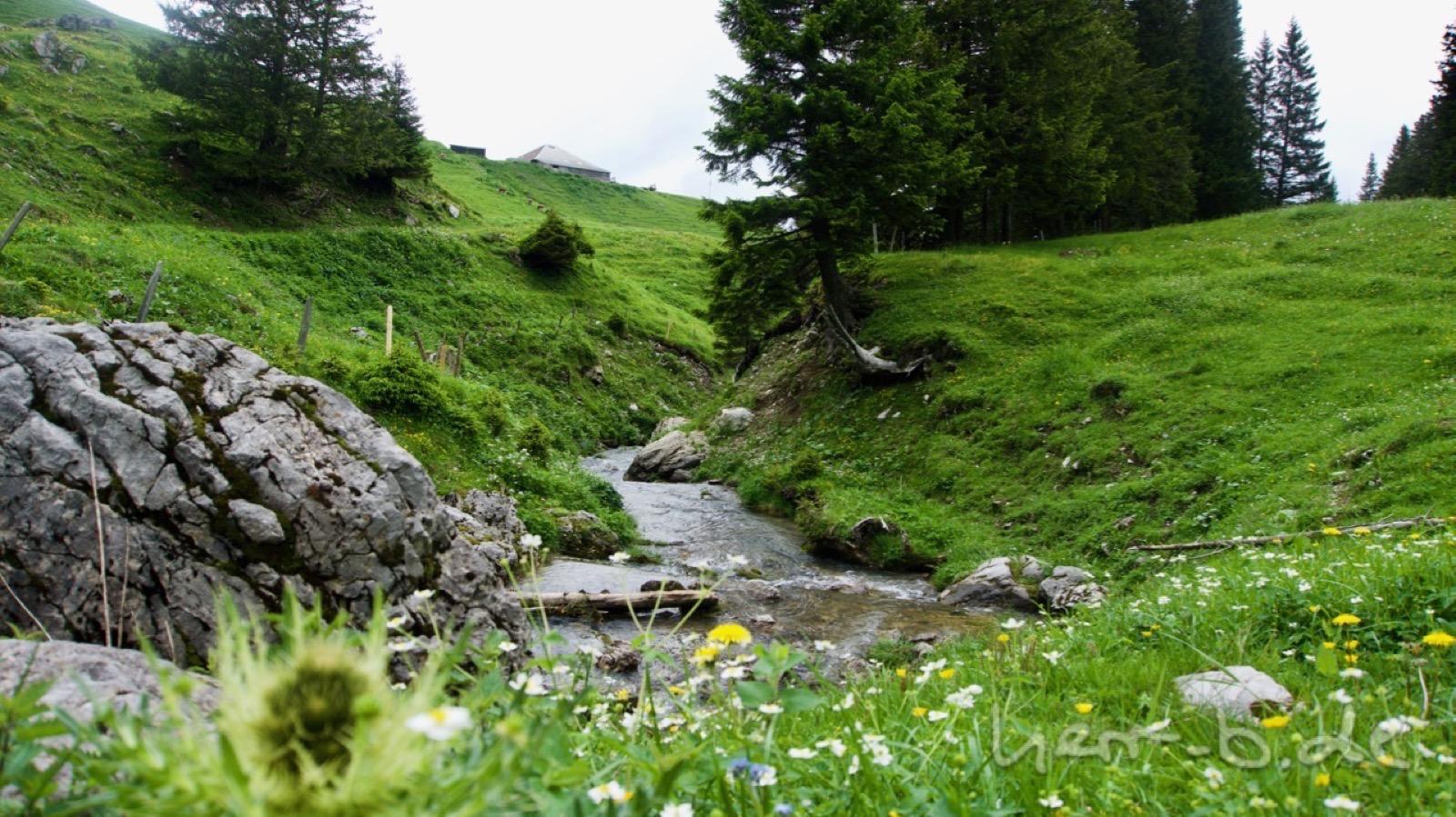 Der idyllischer Abfluss des Gantrischseelis.