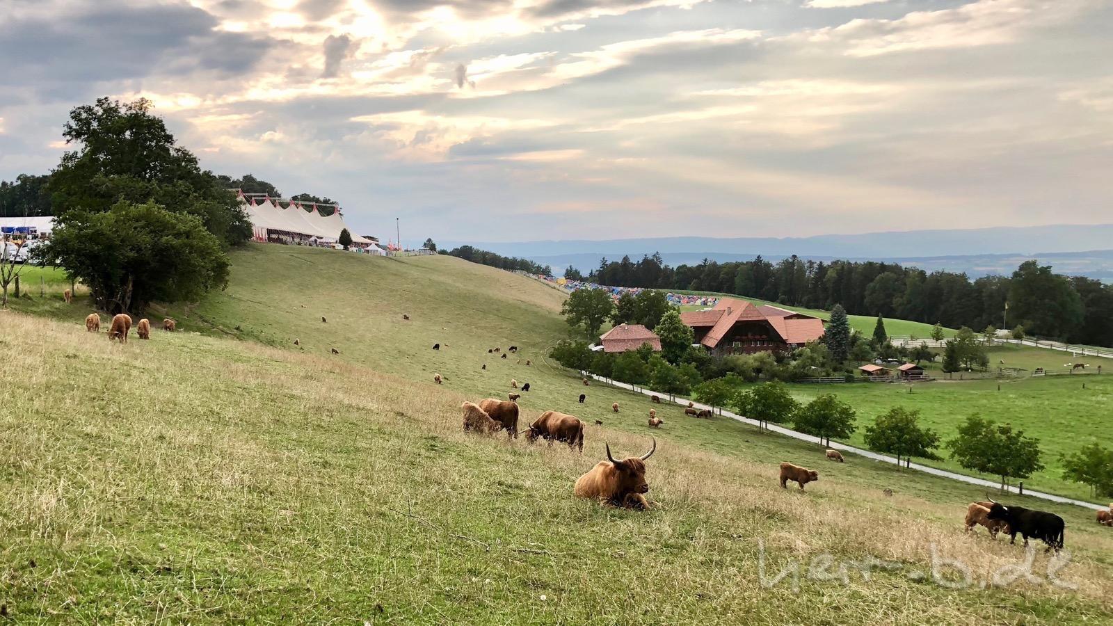Die Gurten-Highländer und im Hintergrund das Gurtenfestival.