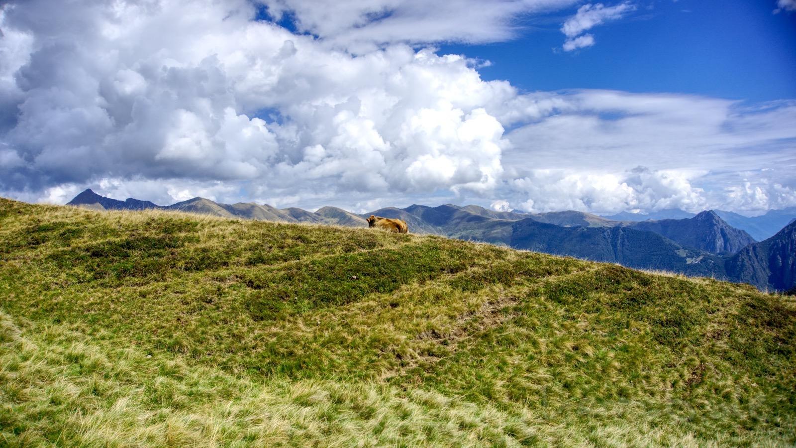 Kuh kurz hinter der italienischen Grenze genießt die Aussicht.