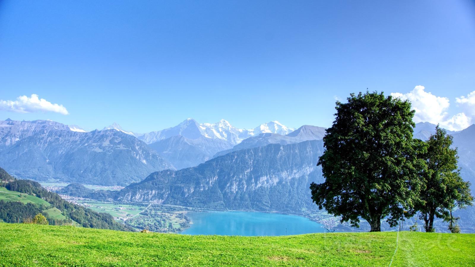 Eiger, Mönch, Jungfrau, Thunersee und schöner Baum.
