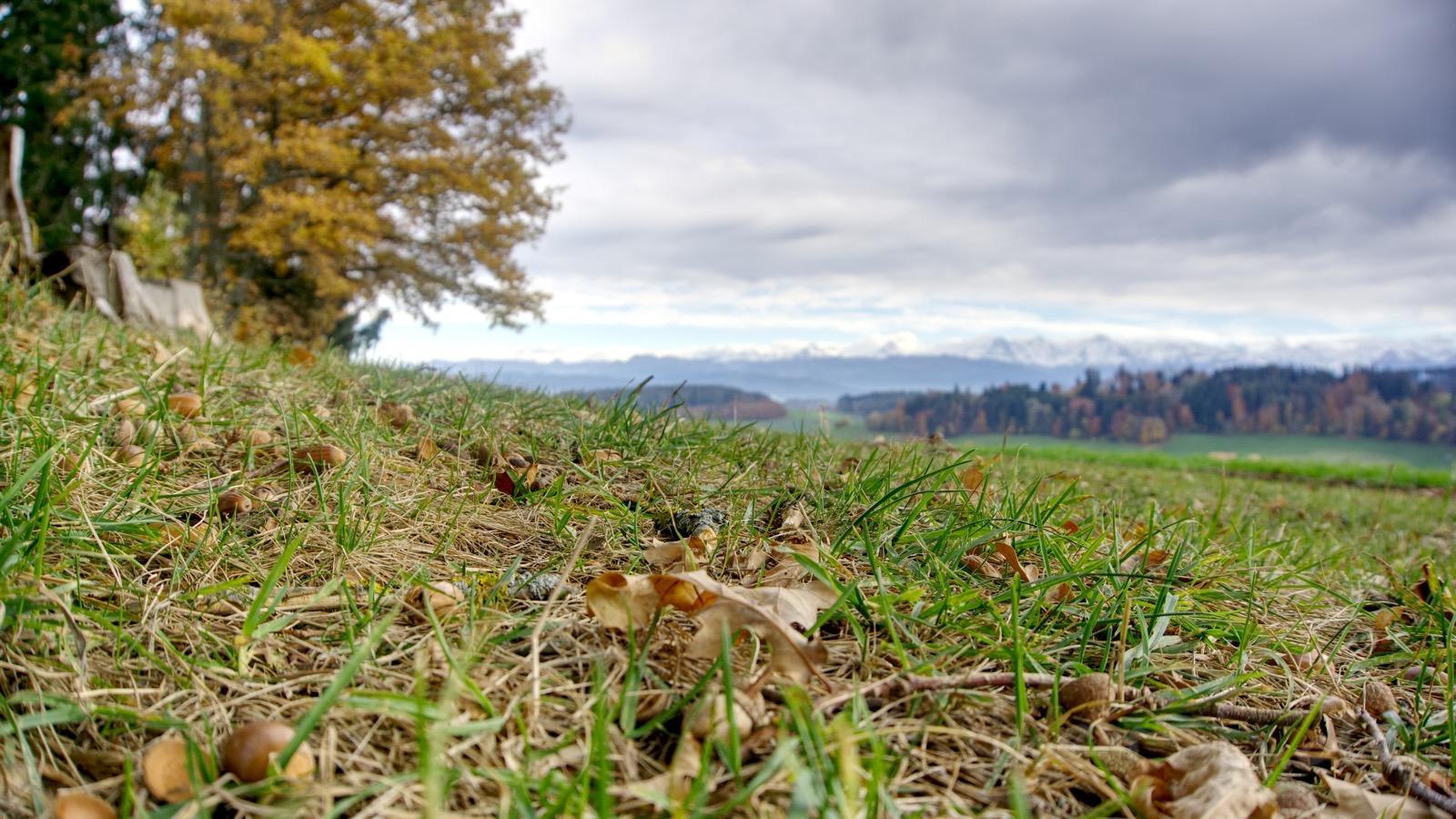 Herbstliche Wiese am Ulmizberg