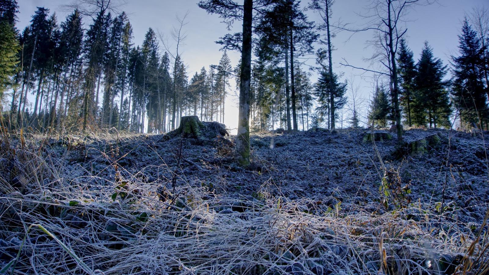 Frostiger Wald bei der Gemeinde Wald.
