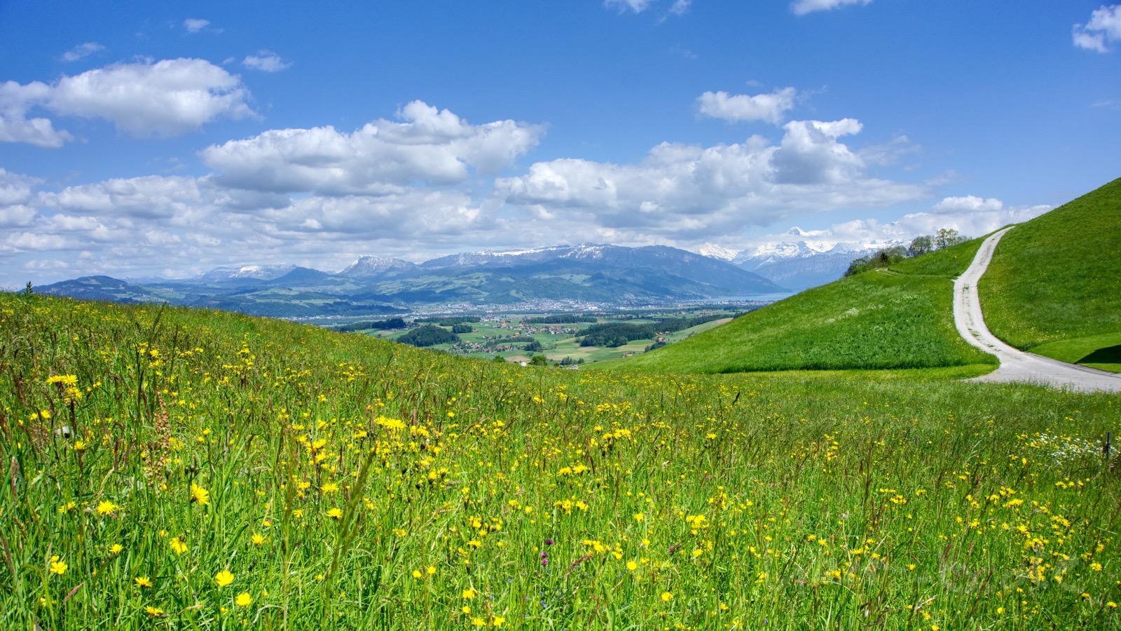 Frühlingswiese und Blick zum Thunersee und aufs Oberland.