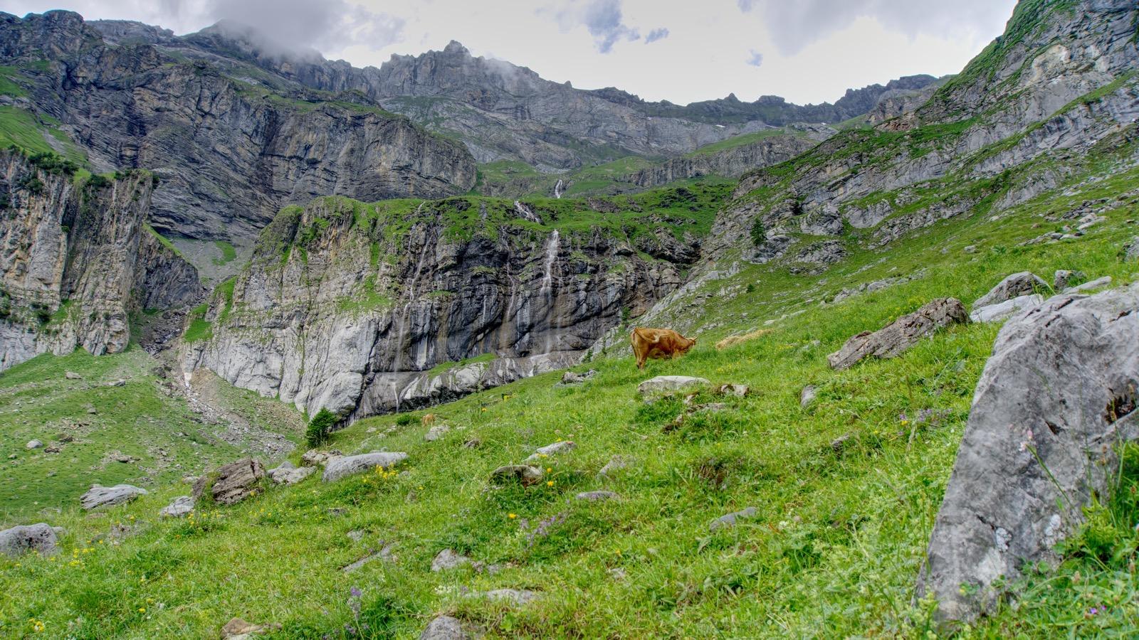 Landschaft mit Kühen bei Unterbärgli.