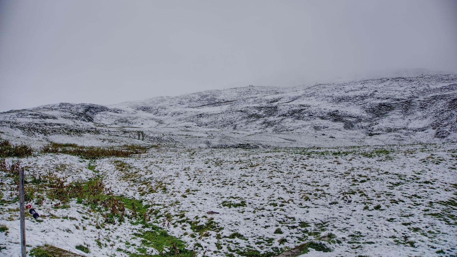 Schneelandschaft mit Kühen und Murmeltieren.