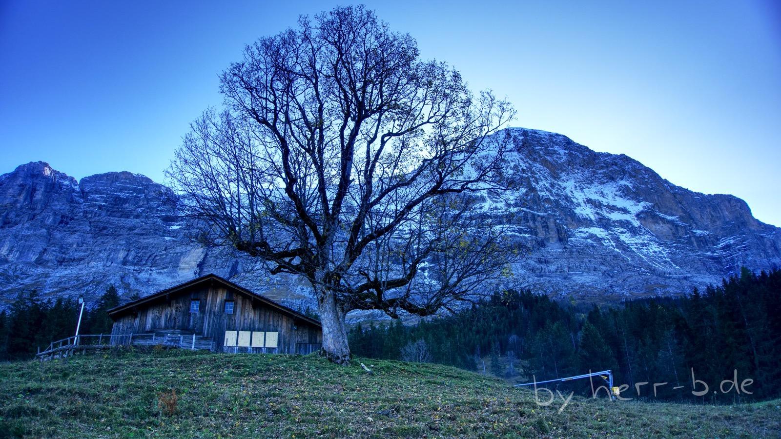 Der Lieblingsbaum an der Brandegg.