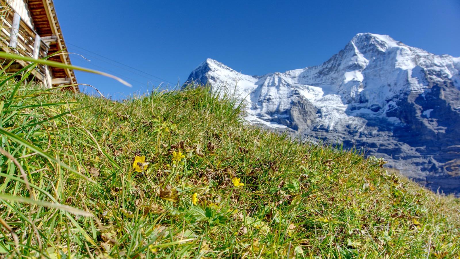 Saftiges Gras und frische Blüten an der Rinderhütte.